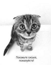 Александра Фокина, 26 октября 1988, Новодвинск, id34730803